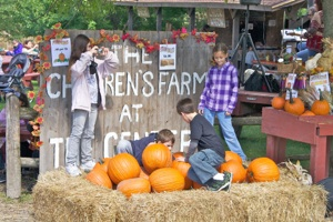 pumpkins fall 2011 17