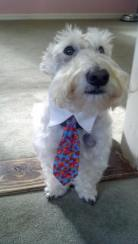 MacGreagor wears his UF tie at Sweet Paws Bakery to support the Gators!