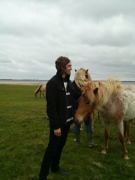 FrieslandFriesland with horses from Iceland