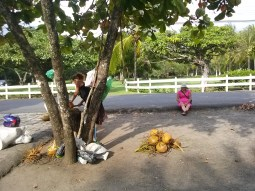 Roadside coconut lady and friend