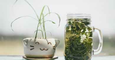 ways to use a mason jar - Plant in mason jar