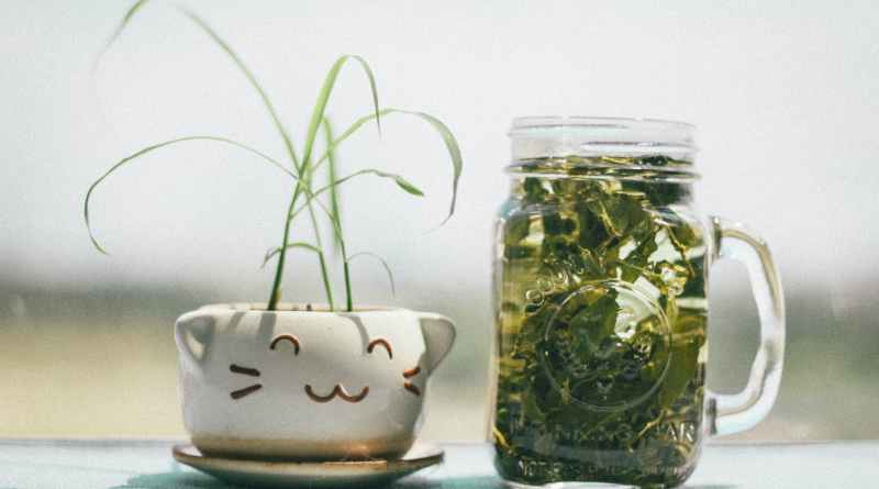 ways to use a mason jar - Plant in mason jar