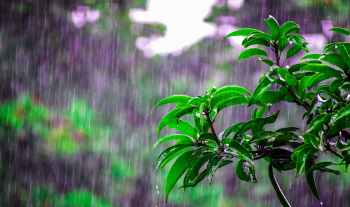 6 ImportantTips To Stay Healthy In Rainy Season