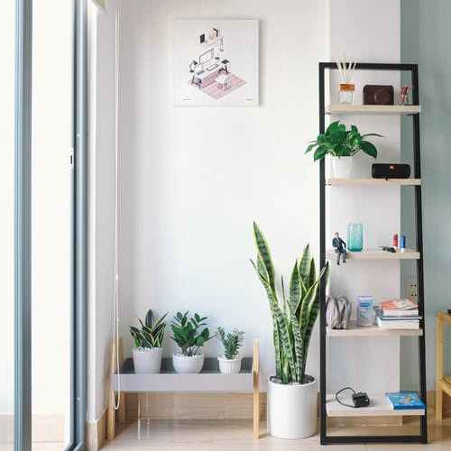 10 Best Air Cleaning Houseplants That Can Dramatically Improve Your Family's Health