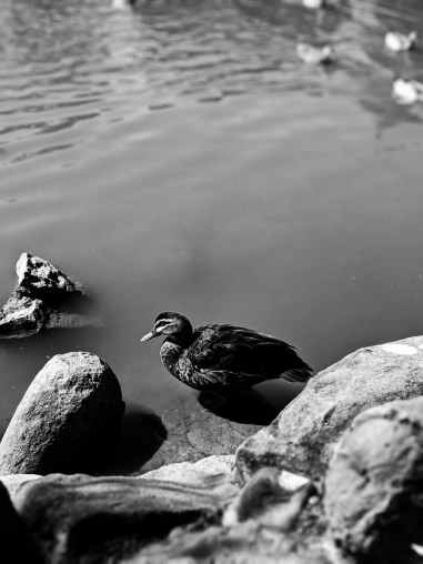 Summer Vacations - at the pond