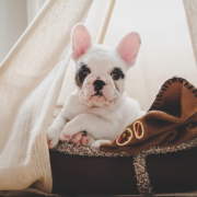 How To Create A Cozy And Safe Space For Dogs?