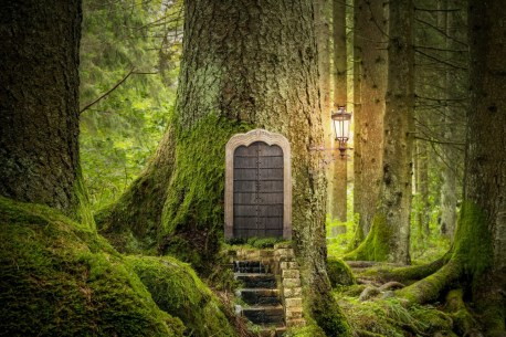 magic door in old oak tree in a forest, for artists of color post