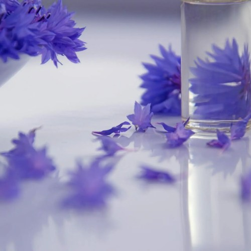 purple flowers in a beautiful glass jar. pexels-cco licensephoto-672078