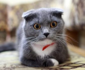 shocked cat. People can get shocked and unsubscribe, but that's usually a good thing.