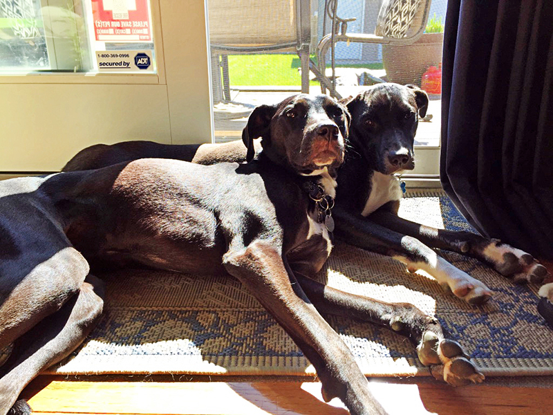 """In honor of National Dog Day, I'm celebrating my two big girls on the blog! Come along on our journey to """"parenthood""""!"""