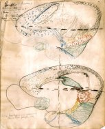 Original colour drawing by Brodmann, showing cortical areas in the European ground squirrel Spermopilus citellus [Archive of the MPI for Brain Research copy