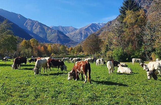 Rural Camp e assaggi di agricoltura virtuosa