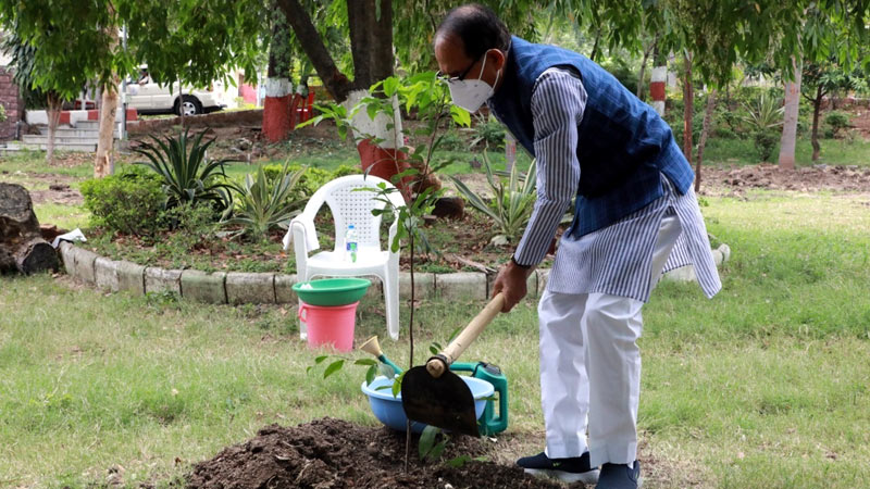 Chief Minister Shri Chouhan planted maulsiri plant in Chief Minister's residence