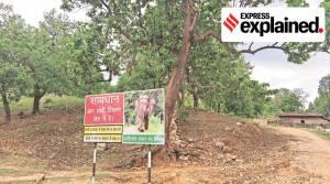 Lemru Elephant Reserve, Chhattisgarh elephant reserve, T S Singh Deo, MLA Laljith Rathia, indian express, indian express explained