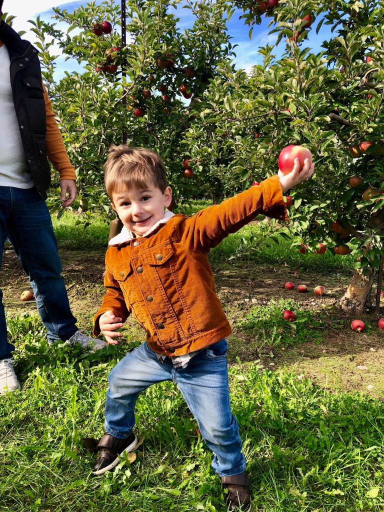 Apple picking at Cranes Orchard in Fennville, Michigan. Their pumpkin patch is small, but the orchard is one of the biggest I have seen!