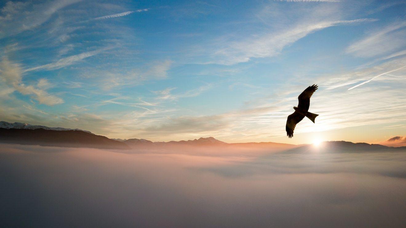 backlit-bird-clouds-755385