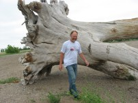 Large Tree Root - Lake Thompson, SD