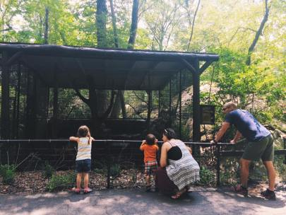 Bear Mountian Zoo