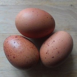 Dark Speckled Egg