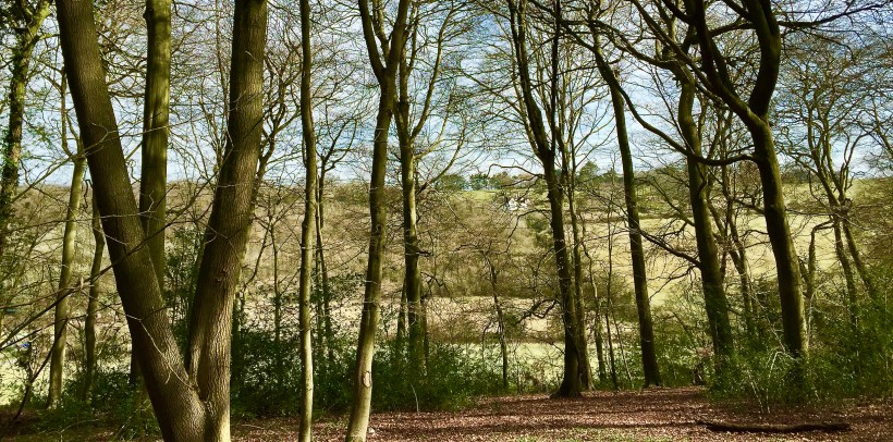 Pigotts Wood in spring