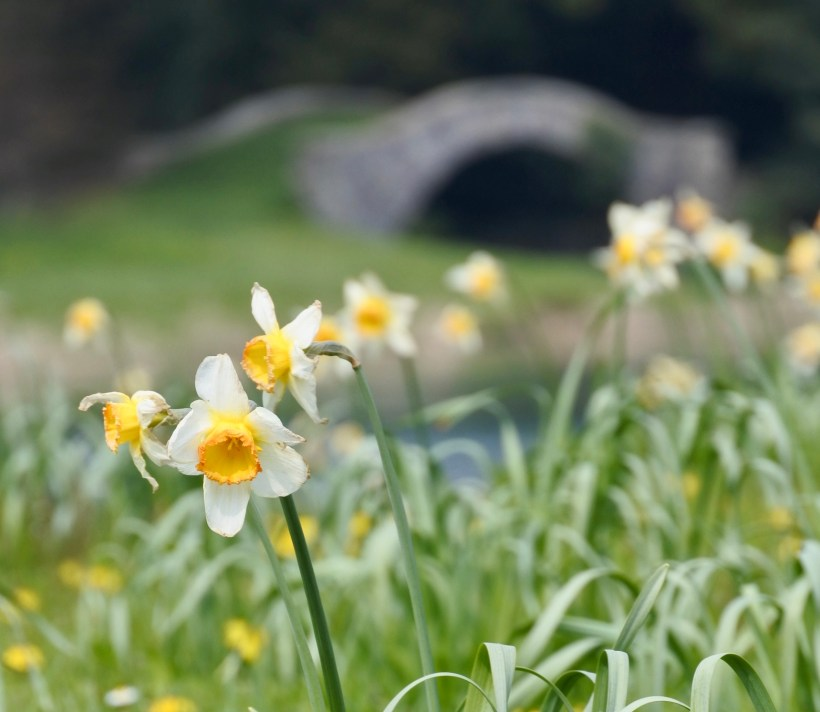Spring flowers in the garden at West Wycombe Park