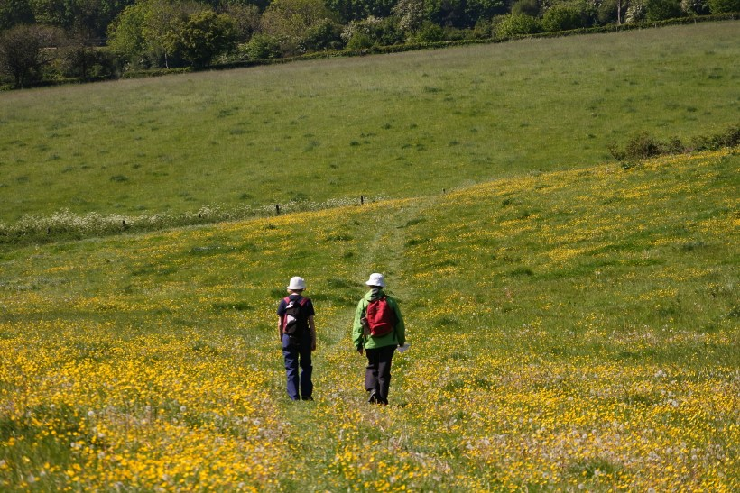 Two walkers in a field of buttercups