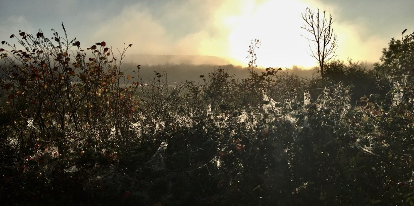 Cobwebs cover the hedgerows during Halloween