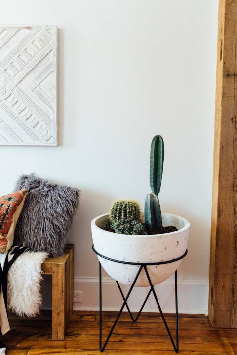 Cactus used in Living Room Design