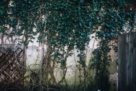 Lancaster City Backyard