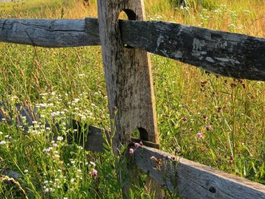meadow-fence