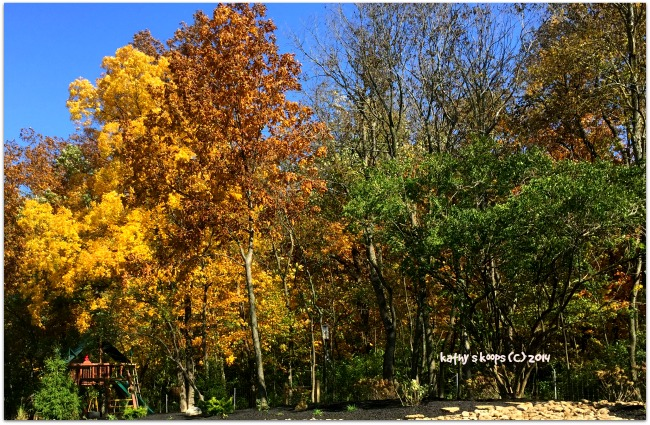 Cincinnati Fall Colors