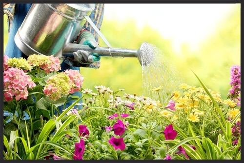 3 Ways to Keep Your Yard & Garden Healthy While you may think your home and yard are separate and do not impact one another, this isn't always the case. There are different ways you may actually be doing damage to your landscaping or garden because of the things that happen inside of your home. If you take pride in your lawn or garden, be aware of what is going on in both your yard and your home. Water & Chemical Problems If you wash your floors, you may go outside and dump the bucket of dirty water out into the backyard. But what are those chemicals going to do to your yard? Floor cleaning products often contain ammonia and while ammonia is found naturally in plants, once it is diluted with water, it changes form and can actually do more harm than good. Household ammonia will discolor your plants, burn the roots and eventually kill them.