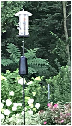 cincinnati bird watching