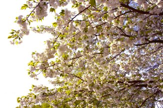 alightcirclewebsitespringblossoms2mpbaecker