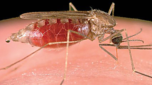 Ending Malaria For Good Thisday TheCitizen Its All About You