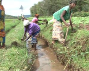 women  cultivating in marshland