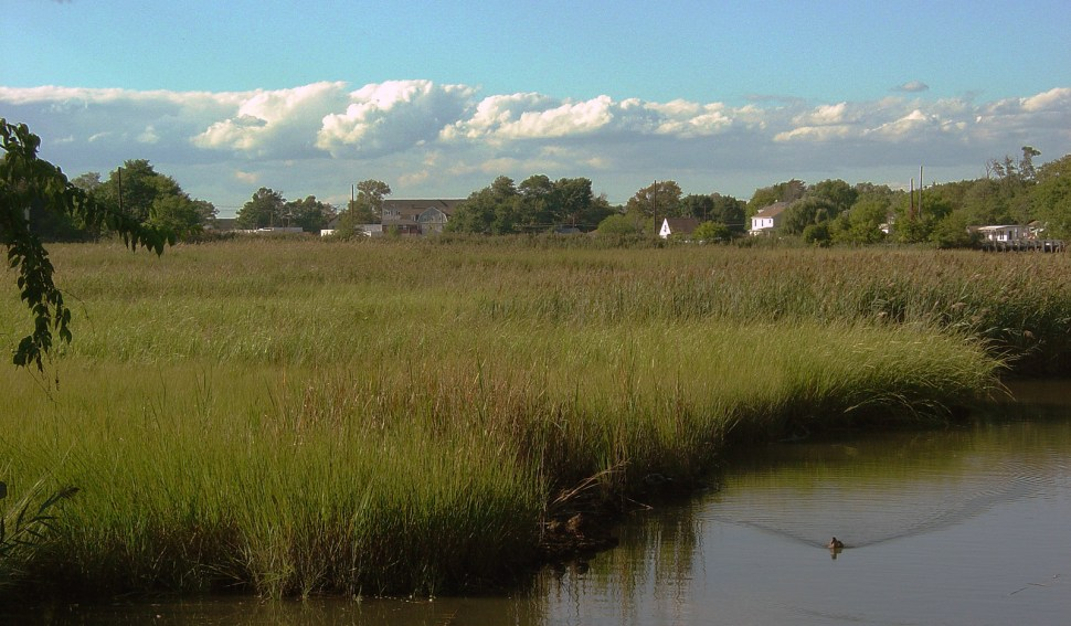 Keansburg Marsh, New Jersey (Photo: Andrew Willner)