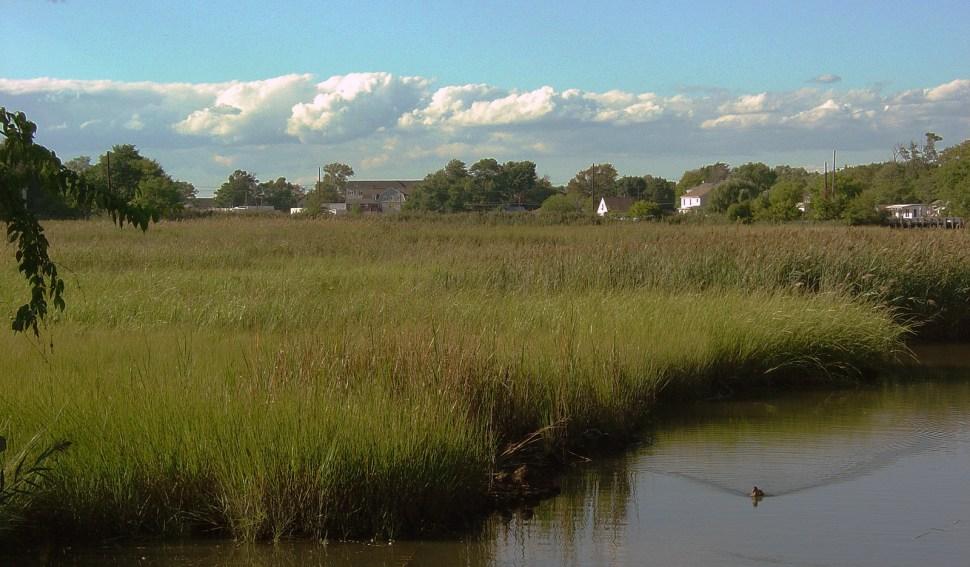 Keansburg Marsh, New Jersey (Photo: Andrew Willner)