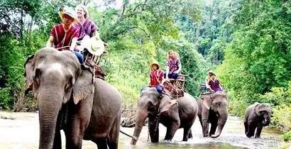 Elephant Ride in Thailand