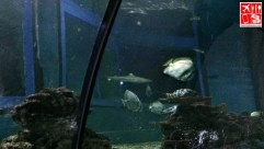 Fishes in the Observation Tunnel
