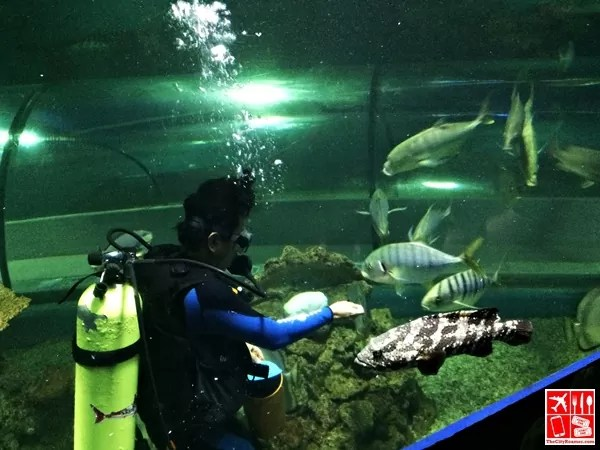 Fish feeding session at the Boracay Oceanarium