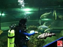 Fish feeding session at the Boracay Oceanarium
