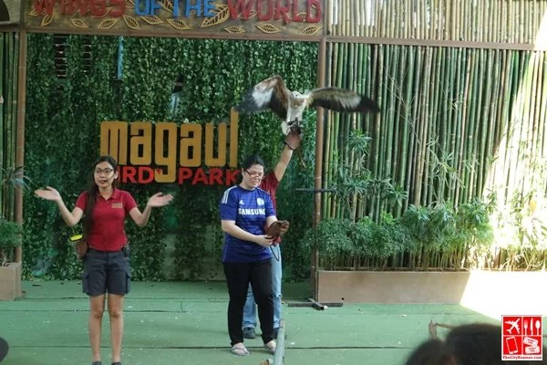 bird show at magaul bird park
