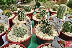 Cacti will be on display at the Hortikultura Filipina 2018