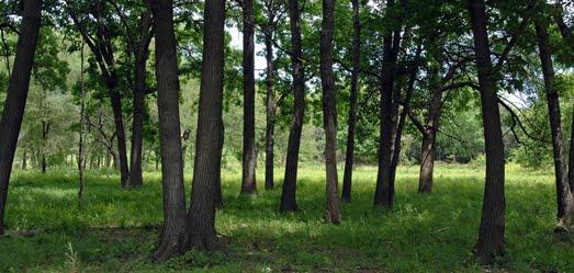 Forest at North Park Village Center