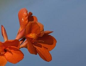 1164, orange flower