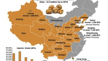 Chinese nut imports from US to decrease – The Clipper on books sale, white sale, green sale,