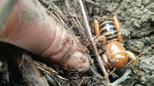 tiny_bug