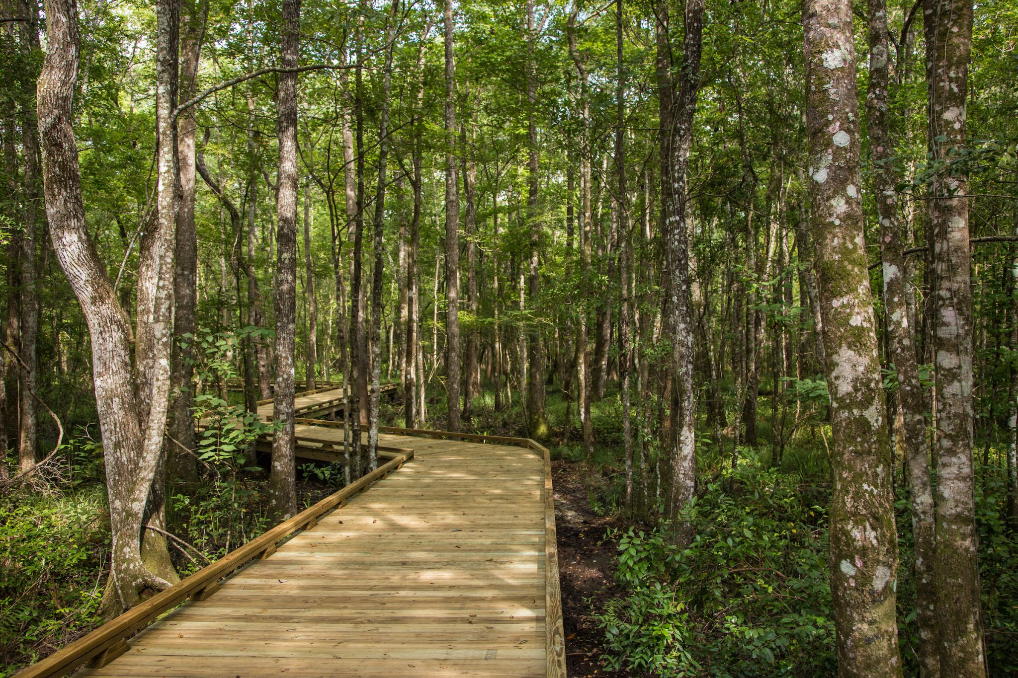 Shearwater nature trail