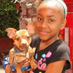 Jayonna Ewart w/ Prince, Asbury Park - He's a 7 month old chihuahua. He does a lot of tricks. He jumps up and down. He likes to play a lot.